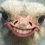 I am an Ostrich