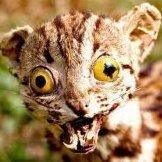 Richie_Wellens_Cat