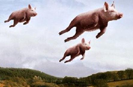 pigs.JPG.079eb204566d202610403404f0eeed7d.JPG