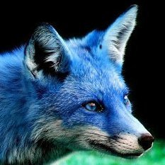 Blue fox LE2