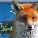Kendal Fox