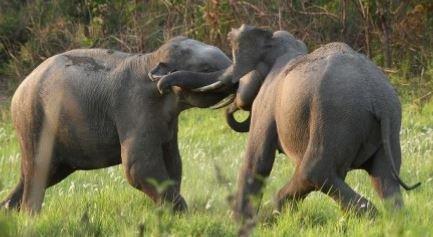 elephants.JPG.9b5047ed806c2ac6dae62f87b8cff5f3.JPG